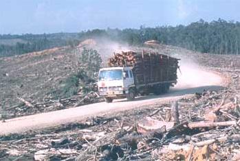 Resultado de imagem para amazônia desmatada